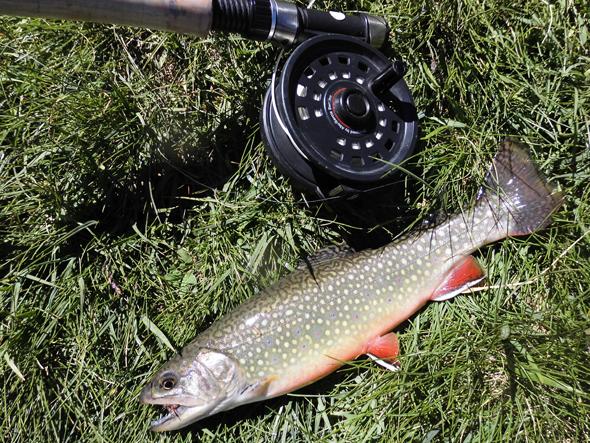 pesca de la trucha en Andorra