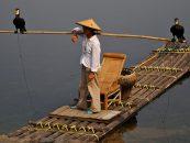 ¿Qué es eso de la pesca con cormorán?