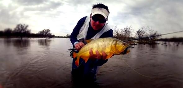 Vídeo de pesca: amando la pesca a mosca