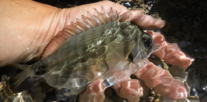Donde practicar el Rockfishing ligero