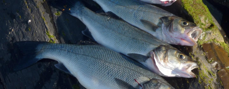 Moraleja en la pesca, quien ríe el último, ríe mejor