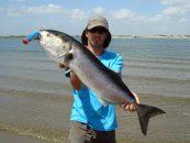 Top water spinning, la pesca más excitante