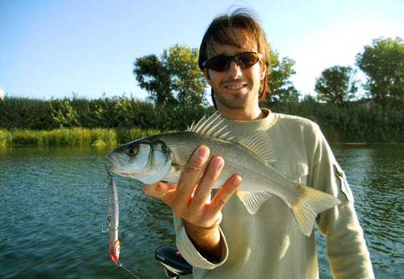 La lubina es una de las especies que podemos pescar en otoño