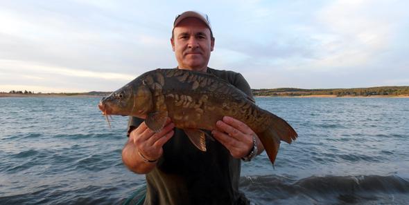 pesca de carpas a la inglesa para principiantes