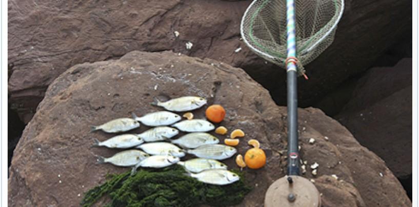 La pesca de salpas, la alternativa más segura para pescar en invierno