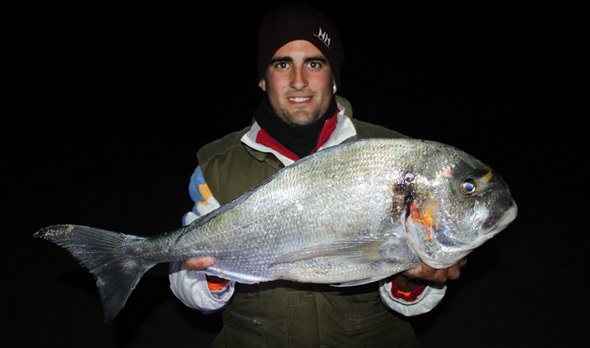 cebo para la pesca de doradas
