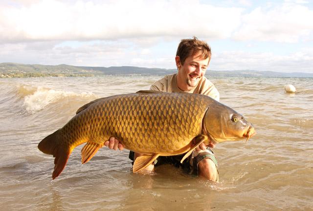 Vídeo de pesca: grandes carpas en el Bolsena