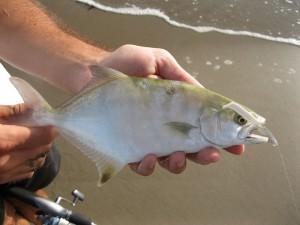 Pesca con buldó y escabelas