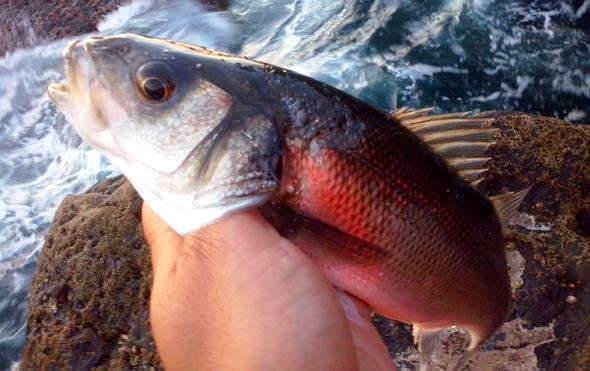 tener moral para ir de pesca