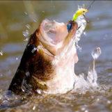 La técnica de black bass desde orilla en entorno difícil, aprende a salvar obstáculos