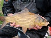 Siete consejos para mejorar nuestras jornadas de pesca de carpa
