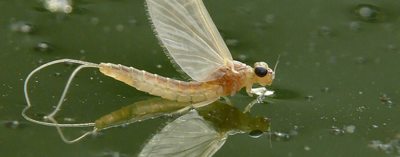 Tres moscas de marzo para el arranque de la temporada