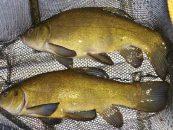 Pasión por pescar tencas