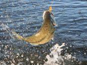 Rincones de pesca: El embalse del Zujar