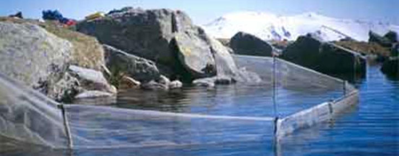 La erradicación del Salvelino de la Laguna de Peñalara: ¿Una experiencia trasladable a otros lagos de montaña?