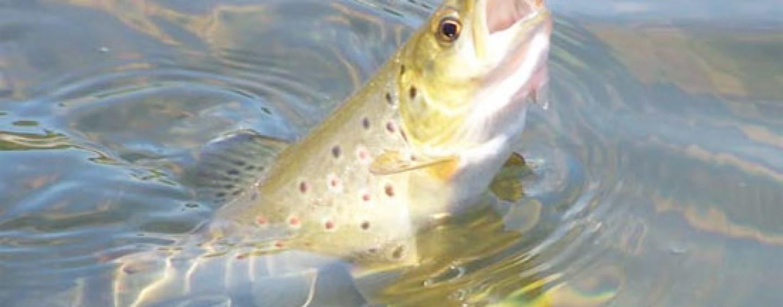 Cómo sacar la licencia de pesca de La Rioja