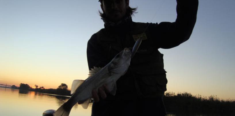 Explosión en superficie con la pesca de lubinas con paseante