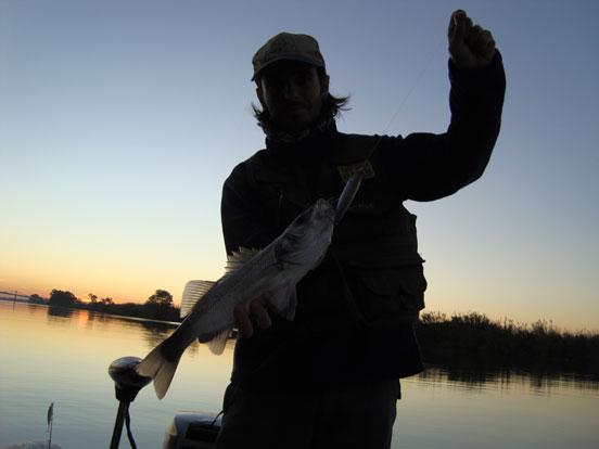 pesca-de-lubinas-4