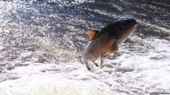 pesca con cucharilla del salmón y reo