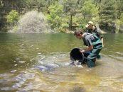 De pesca en la Sierra de Guadarrama desde La Jarosa a Santa María de la Alameda