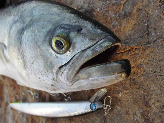 como pescar con minnows