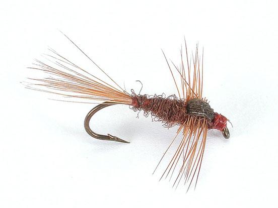 ephemerella-ignita