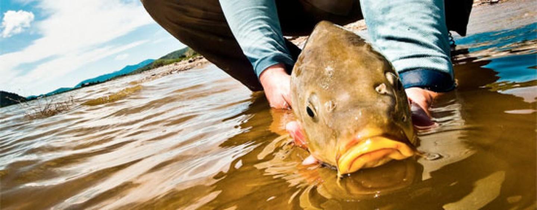 Consejos para la pesca de carpas en lo más duro del verano
