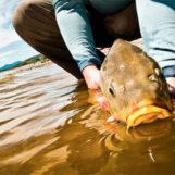 Pezcador al día, principales noticias de pesca (Junio 2016, 4)