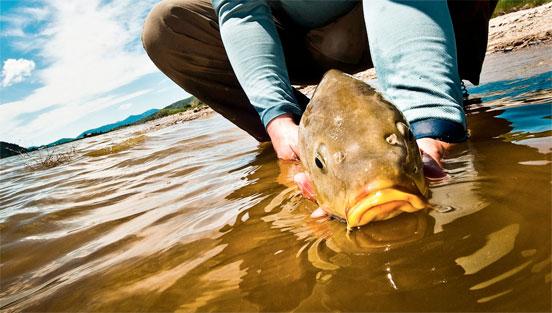 pesca de carpas en lo más duro del verano