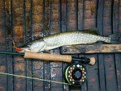 Alternativas para la pesca a mosca en otoño