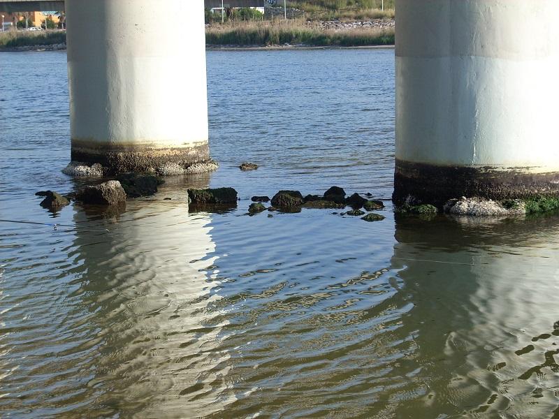 Pesca a spinning en estructuras artificiales