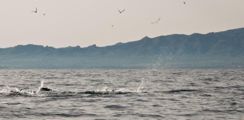 Situaciones para los mejores lances de pesca a spinning