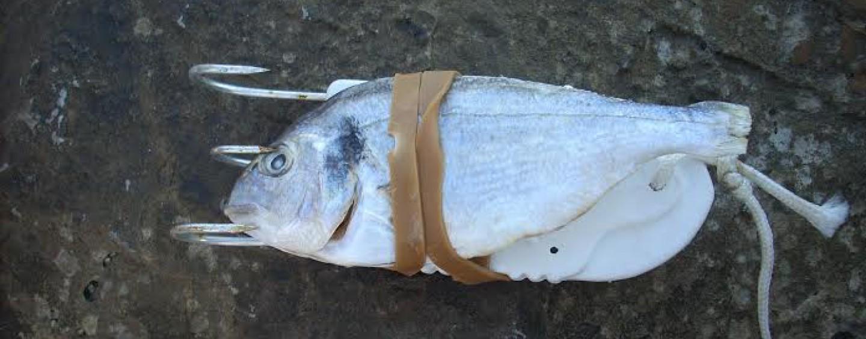 La pesca del pulpo con pulpera desde costa