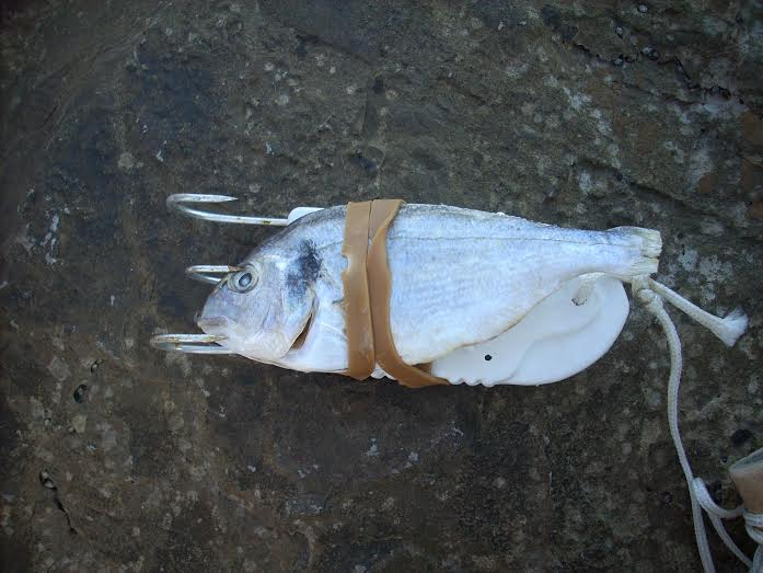 cebo pesca del pulpo