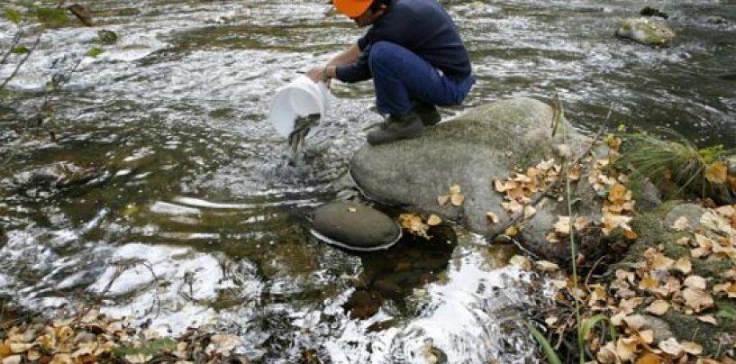 ¿Las administraciones apoyan la pesca?: Los increíbles requerimientos de la Comunidad de Madrid para repoblar en un coto intensivo