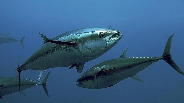 Pesca deportiva del atún