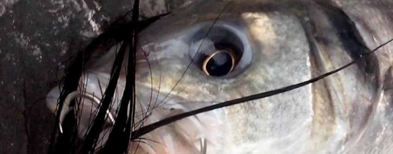 Una gran pescata, una mañana para recordar: 6 lances … ¡6 peces!