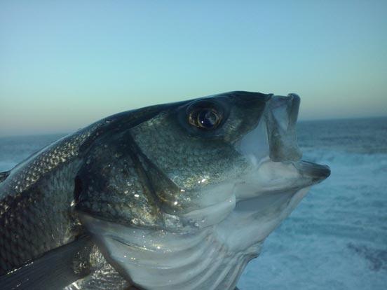 pescador de spinning costero de robalizas