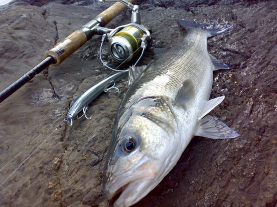 equipo para la pesca de lubinas
