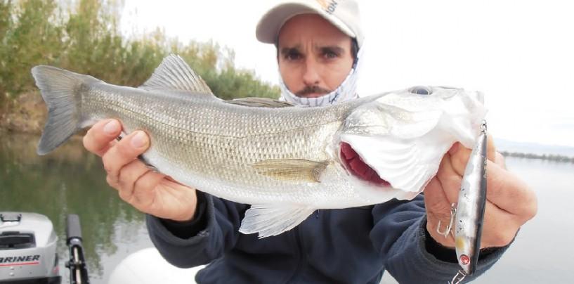 La pesca con paseantes, los reyes de la superfice