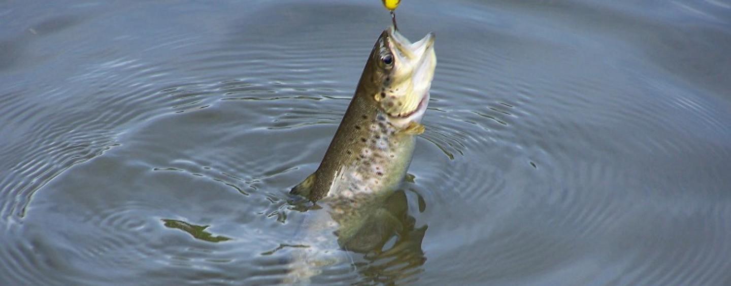 Pesca con cucharilla en el arranque de temporada