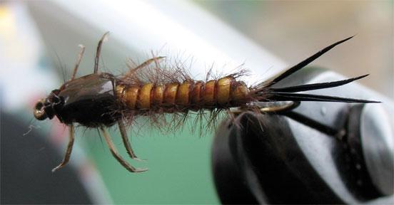 hormiga-alada