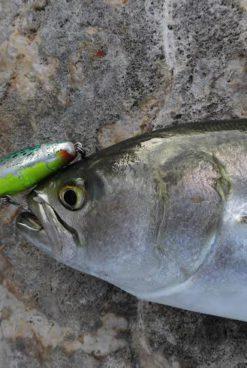 La pesca con poppers despierta a los depredadores más pasivos