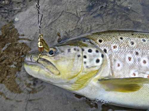 pesca de cucharilla