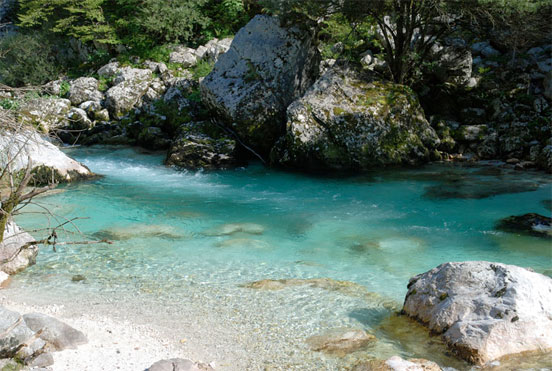 Trucha marmorata en Eslovenia