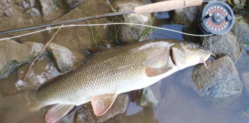 La pesca en el Embalse de Valdecañas