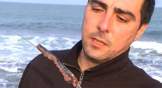 anzuelar sardinas para surfcasting