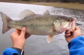 Vídeo de pesca: Black Bass desde pato en la transición a la primavera