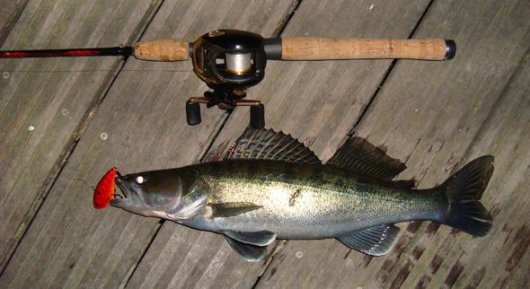 pesca de la lucioperca