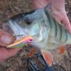 pescar con paseantes hundidos
